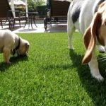 Synthetic Pet Turf Company Oceanside, Artificial Pet Grass Backyard Installation