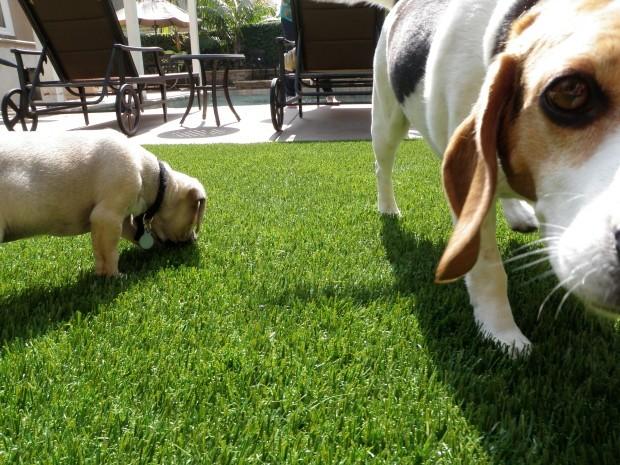 Synthetic Pet Turf Company Oceanside, Artificial Pet Grass Backyard Installation