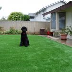 Synthetic Lawn Pet Turf Oceanside, Top Rated Artificial Grass Installation for Dogs