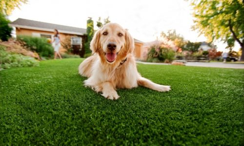 Synthetic Grass For Dogs Oceanside, Artificial Lawn Dog Run Installation