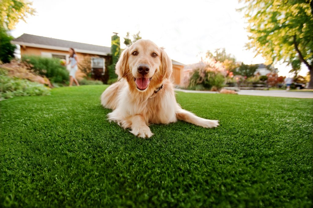 Synthetic Grass For Dogs Oceanside,